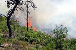 Δεύτερη φωτιά μέσα σε μια μέρα στη Σάμο